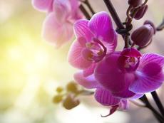 Подходящи цветя и билки за всяка зодия
