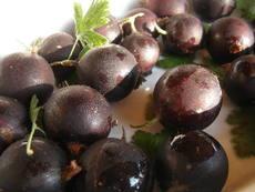 Сироп от цариградско грозде