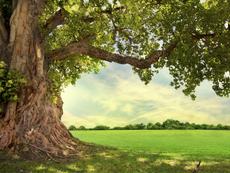 Какво означава, ако сънуваш дърво?