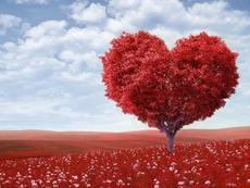 Мисъл на деня за... лицето на любовта