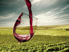 Какво не знаете за виното?