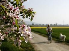 Пролетта – най-доброто време за промяна в живота