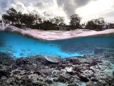 Знаете ли, че... Големият бариерен риф се вижда от Космоса? (галерия)