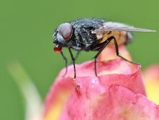 Домашен спрей против насекоми