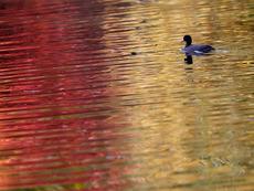 Любовни есенни рими – 16-а част