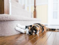 """Защо котките """"месят"""" или """"масажират"""" с лапи?"""