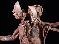 Удивителна образователна изложба с истински човешки тела гостува в София
