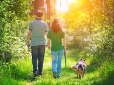 Как разходките в гората подобряват здравето ни