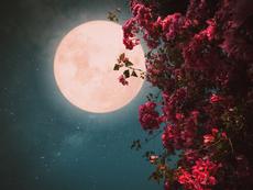 Пълнолуние в Скорпион на 27 април и розова Луна