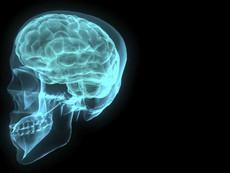Малкият мозък е с голямо значение