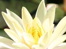 Свежи идеи за цветя в дома и офиса