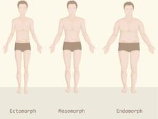Какъв е вашият тип тяло?