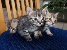 Котка под наем – реален бизнес в социалната мрежа