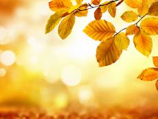 Чака ни топла есен, вижте прогнозата
