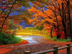 Тест: Какво ще ви донесе есента?