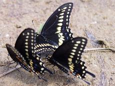 Притча за трите пеперуди