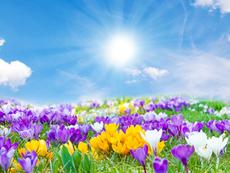 Символно значение на различните цветя