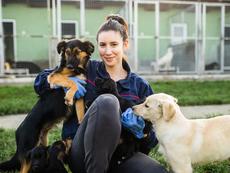 Причини да осиновите куче от приют, вместо да купувате
