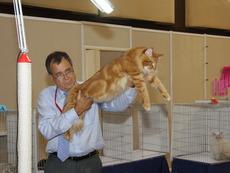 Най-голямата котка в света пристига на изложба у нас