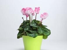 С какво да подхраним увехналите растения?