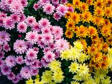 Зеленчуци и цветя, които да посадите през август (галерия)
