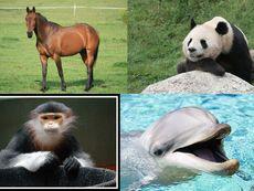 Какво издава за личността ви любимото ви животно?