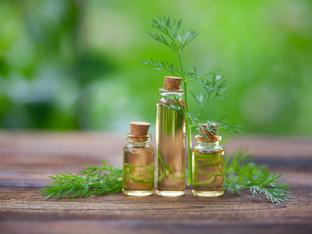 Етерично масло от копър и неговите ползи
