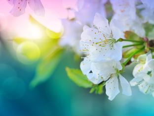4 зодии, за които април ще е прекрасен