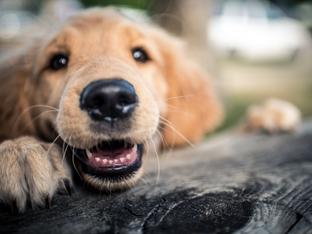 5 породи кучета, подходящи за семейства с деца