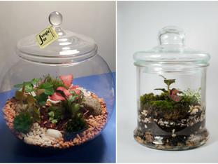 Jungle Jar – мини екосистема в буркан, която се грижи почти сама за себе си
