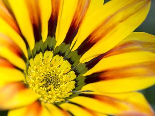 Газания – слънчева украса за дома