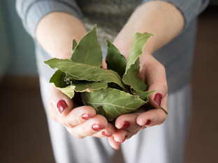 Страхотните ползи за здравето от дафиновия лист