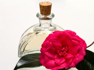 Здравословни ползи от маслото от камелия