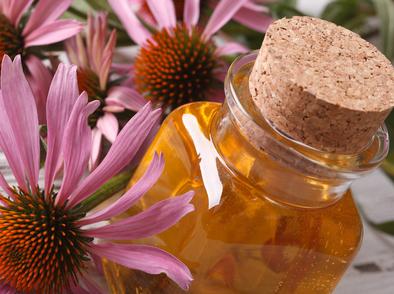 13 ползи за здравето от ехинацеята