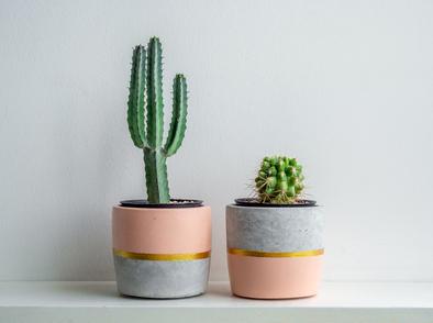 Как правилно да поливаме кактуса?