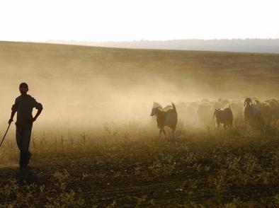 Притча за завистливия овчар