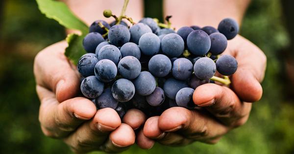 Снимка: Масло от гроздови семки за фантастична кожа