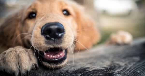 Какво е семейство без куче?! Кучето неслучайно е най-добрият приятел
