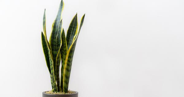 Растенията в дома са най-добрата пречистваща система. Ако знаете кои
