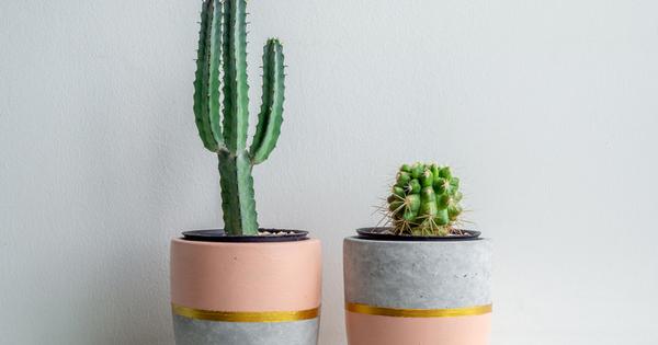 Смята се, че кактусът е едно от най-лесните видове растения