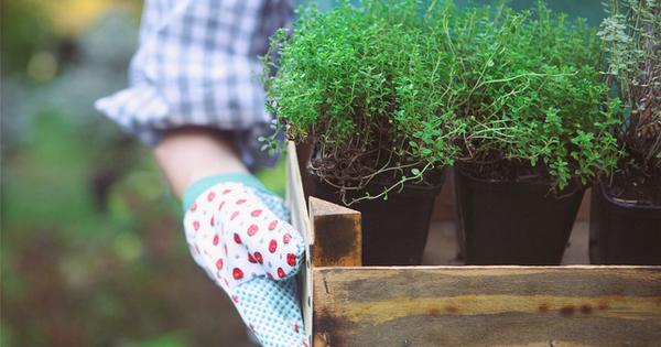 Отглеждането на цветя и стайни растения прави дома по-уютен и
