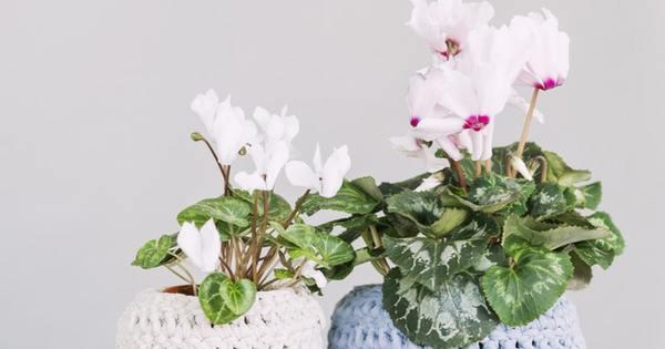 Растенията внасят у дома повече аромат, цвят и красота. Богатото