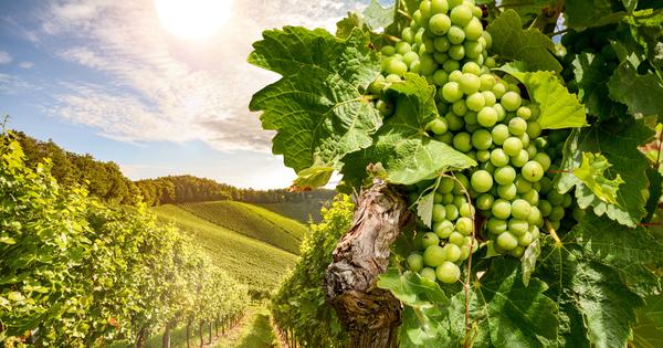 Есента наближава, а с нея и сезонът на много плодове