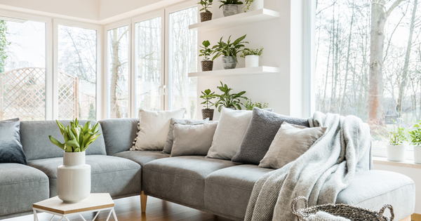 Част от декорация на всеки дом, градина или офис са