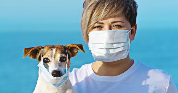 """Има ли опасност коронавирус да се предаде от животно на"