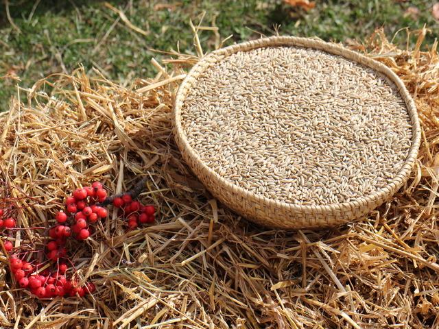 Варено жито - ашуре