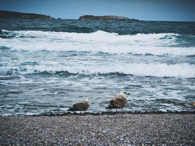 Снимка: librestock.com