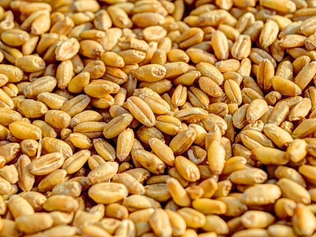 Варено жито