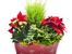 Растения, които ще ви донесат късмет и любов през 2015 година