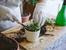 Как правилно да пресадите растение в нова саксия